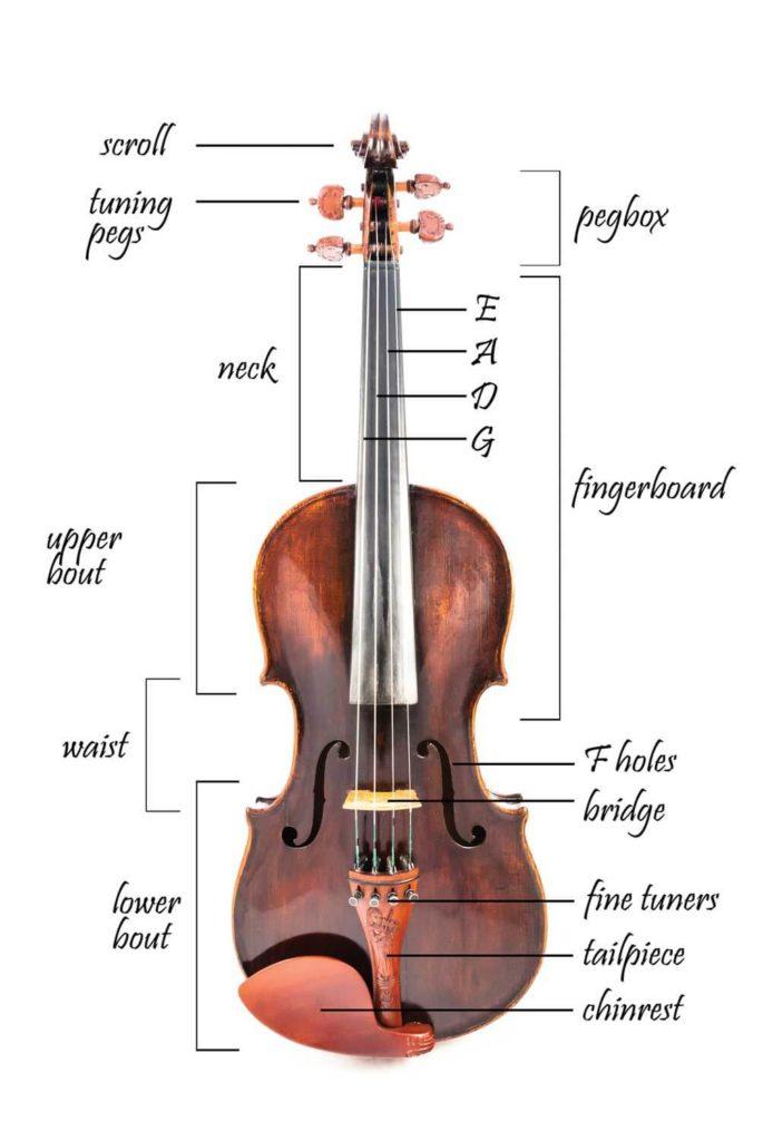Violin Parts Depicted